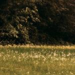 Opony letnie 215/70 R16
